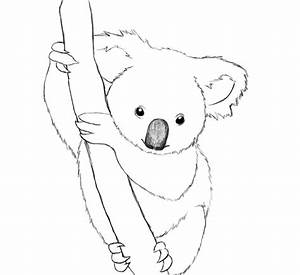Koala Coloring Book Pages