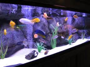 Spongebob Fish Tank Decor Set by Beginners Guide To Setting Up A Freshwater Tropical Fish
