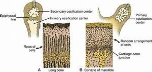 13  Temporomandibular Joint