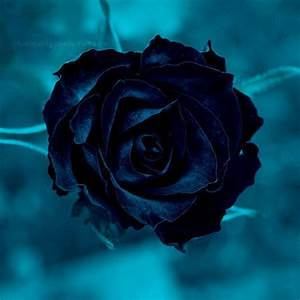 71 best images about flowers on Pinterest | Blue roses ...