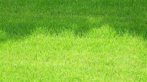 Geschmacksfrage Rasen Oder Blumenwiese?  Themen Brde
