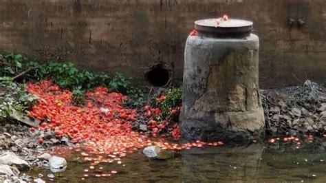 la cuchara employees caught  camera dumping tomatoes  jones falls baltimore sun