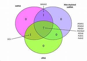 Venn Diagram Showing The Viruses  Viroid Detected In All
