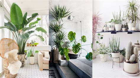 25+ Best Indoor Plants Ideas  Simple Ways To Decorate