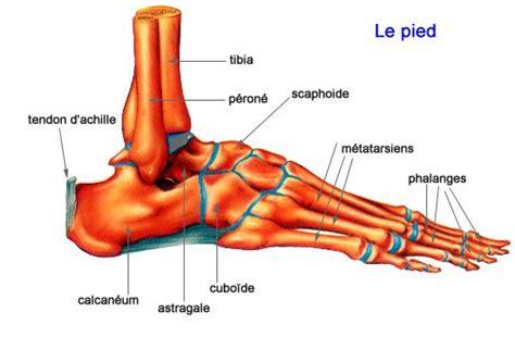 douleur sur le cote exterieur du pied le pied