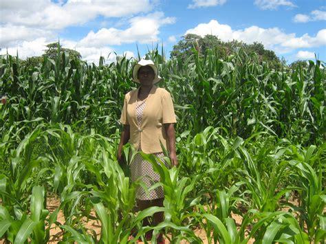 IRIN | How women farmers are battling climate change in Zimbabwe