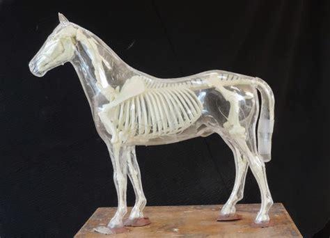 sandy scott art  equine conformation  proportion