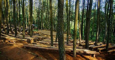 lokasi  rute menuju wisata hutan pinus mangunan imogiri