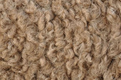 fur yarn sustainable fibres what is camel hair trusted clothes