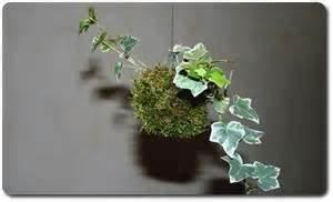 Comment Soigner Une Orchidée : comment garder une orchid e en pot l 39 atelier des fleurs ~ Farleysfitness.com Idées de Décoration