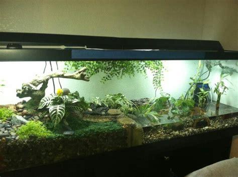 images  fish tanks  pinterest saltwater