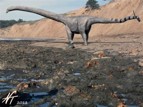 Diplodocus  Facts And Pictures