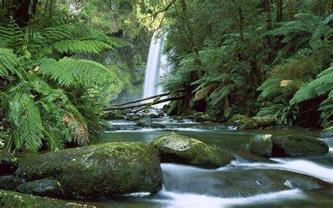 rainforest screensaver hd desktop wallpapers  hd