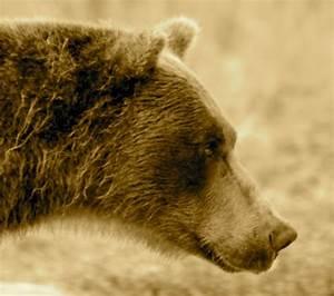 Grizzly Biology & Behavior - Western Wildlife Outreach
