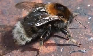 Honey Bee Species Identification