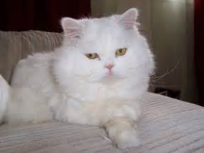 should i put my cat should i put my puss on a diet cat advice
