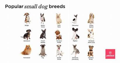 Pet Owner Dog Breeds Advice Petcloud Care