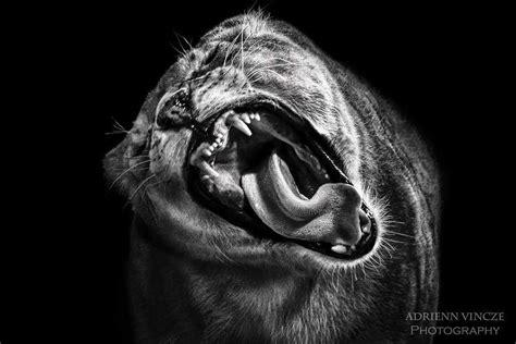 hungarian photographer  awarded   fine art