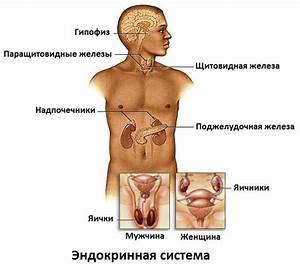 Простатит и аденома простаты лечение народными средствами