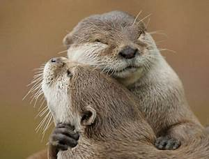 1000+ images about Hearts, Hugs and Love on Pinterest ...