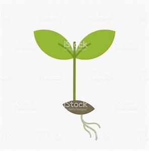 Seedling Clipart Green Plant  Seedling Green Plant