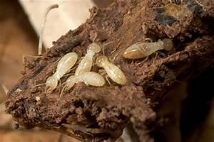 Produit Contre Les Termites : traitements isolation i atir mont de marsan ~ Melissatoandfro.com Idées de Décoration
