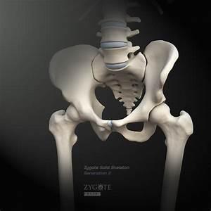 Solid 3d Skeleton Model