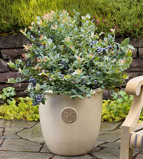 best plants you can grow in containers the