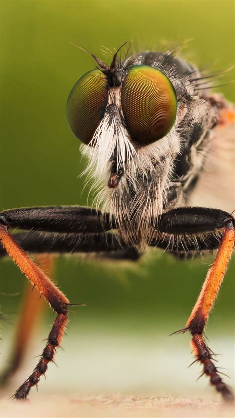 wallpaper fly insects macro green orange animals