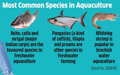 fish farms  produce   thirds  indias fish