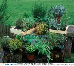 Gräser Kübel Terrasse : details zu 0003168533 kr uter k chenkr uter in topf kasten k bel auf balkon und terrasse ~ Markanthonyermac.com Haus und Dekorationen