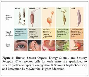 A Study on the Influence of Senses and the Effectiveness ...