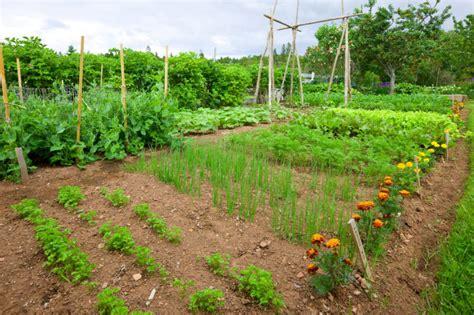 Fantastic Backyard Vegetable Garden Ideas