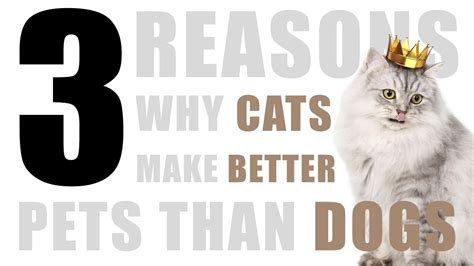 cats better dogs than why pets reasons