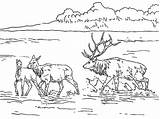 Elk Coloring Lake Lac Bull Sketch Nature Printable Mountain Drawing Coloriages Shallow Coloriage Dessin Album Rocky Colorier Related American Template sketch template