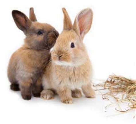 Wie Genießen Kaninchen Ihren Aufenthalt Im Garten
