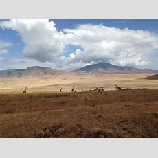 Uhuru!  Picture Of Mount Kilimanjaro, Kilimanjaro