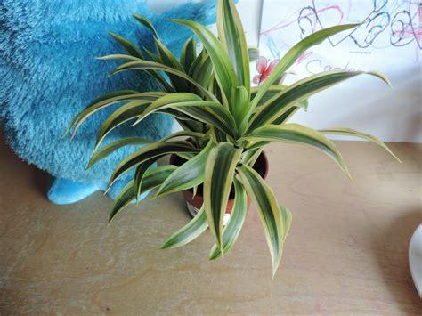 Are These Houseplants Poisonous Askjudyhouseplant411