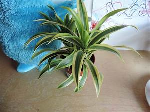 Are, These, Houseplants, Poisonous