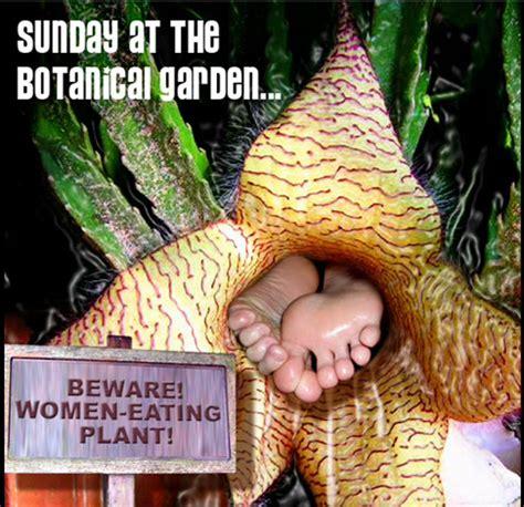 beware woman eating plant  rokenboy  deviantart