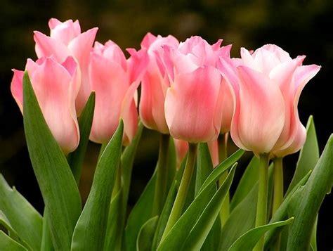 Bulbi Tulipani Quando Piantarli by Bulbi Autunno Bulbi