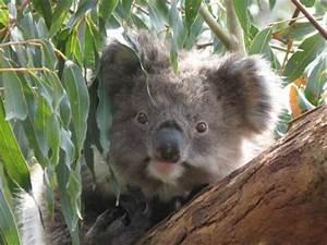 The gallery for --> Bebe Koala