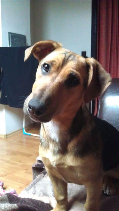 Wilma Dackel Deutscher Schaferhund Golden Retriever