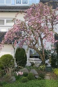Kleine Bäume Für Garten : hausb ume f r kleine g rten haus b ume baum vorgarten und b ume garten ~ A.2002-acura-tl-radio.info Haus und Dekorationen