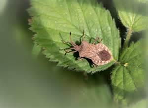 weevil bug bugs and weevils alvecote wood
