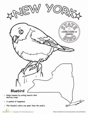 new york state bird worksheet education