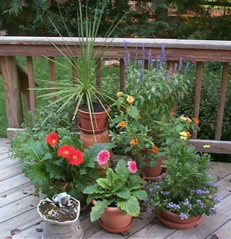 potted plants for outdoors outdoor plants 171 desertfragrance com
