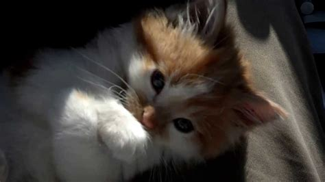 Animal For Adoption Wilson County Humane Society You