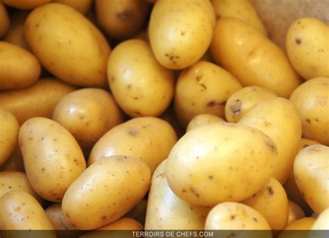 comment cuisiner les pommes de terre de noirmoutier la grenaille le boom de la pomme de terre grenaille