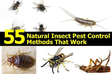 55 Natural Insect Pest Control Methods That Work